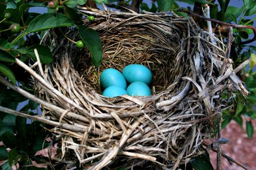 Bird-nest-2_web