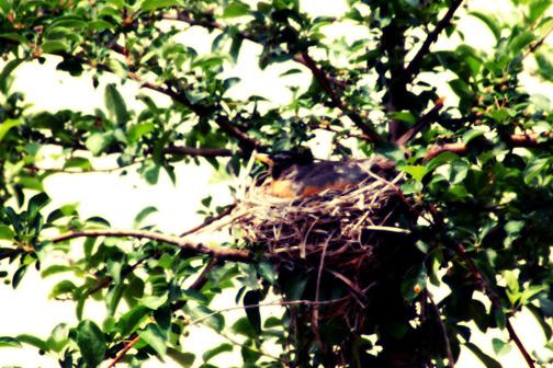 Bird-nest-3_web